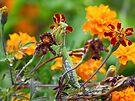 Praying Among the Marigolds by Susan S. Kline