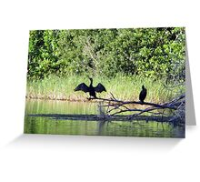Cormorants On the Rainbow River In the Late Sun Greeting Card