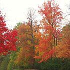 nature's color by ANNABEL   S. ALENTON