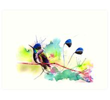 """Spatuletail Hummingbird"" Art Print"