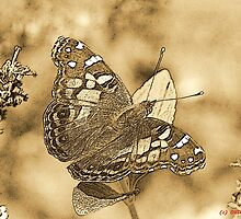 American Painted Lady Sumi-e by Otto Danby II