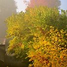 Misty Autumn Morning  by goddarb