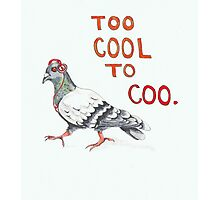 Too Cool to Coo. Photographic Print