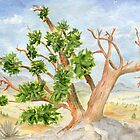 Bristlecone Pine by Diane Hall