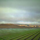 The perfect farm by MarthaBurns