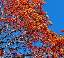 The Flames of Autumn by Kathleen Daley