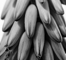 Aloe Vera by zingarostudios