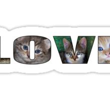 Cats Lover Sticker