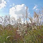 Autumn Grasses by John Thurgood