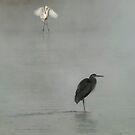 Herr Heron by g richard anderson