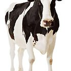 Cow (awesome for iPhone cases) by JuMix