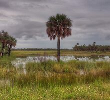 The Florida Seldom Seen by James Hoffman