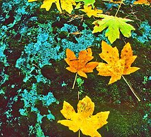 MAPLE LEAVES, LICHEN AND MOSS by Chuck Wickham