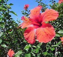 flower by sanguine16