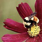 Bee Feast by Lori Peters