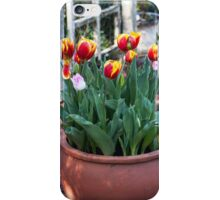 Potted Tulips iPhone Case/Skin