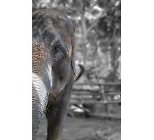 Elephant Glance Photographic Print