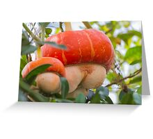 a beautiful pumpkin Greeting Card