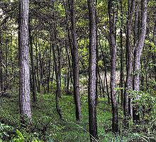 Moraine Hills Forest by Roger Passman