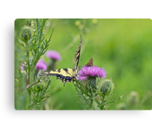 Tiger Swallowtail And Skipper Butterflies On Thistle Canvas Print