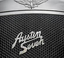Austin Seven Fly Catcher by Sue Martin