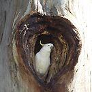 love the cockatoos by Nicola Schultz