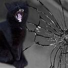 MEOWW-CAT'S BROKEN MIRROR -7YEARS BAD LUCK-NO - SUPERSTITION AIN'T THE WAY. by ✿✿ Bonita ✿✿ ђєℓℓσ