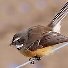 Any Bugs In Your Shed? - Fantail NZ by AndreaEL