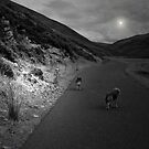FOLLOW THE MOON by leonie7