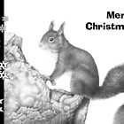 Red Squirrel Christmas Card by Lorna Mulligan