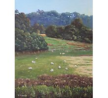 Sheep in a field in the Devon countryside Photographic Print
