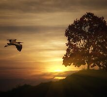 Heron At Sunset by TOM YORK