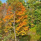 Autumn 1 by Carolyn Clark