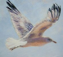 Seagull in flight. Elizabeth Moore Golding 2010  by Elizabeth Moore Golding