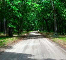 Back Roads of South Carolina by Michael Colgate