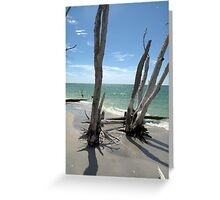 Stumps at Stump Pass Florida, USA Greeting Card
