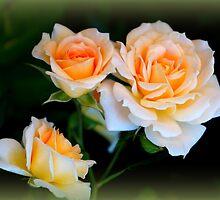 Apricot Dream by Rocksygal52