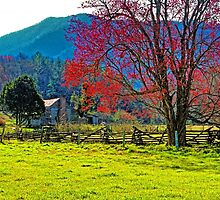 SPRING MORNING,CADES COVE by Chuck Wickham