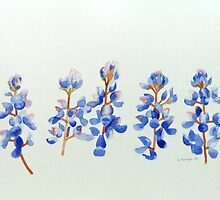 Five Wild Flower by Stephen Borges