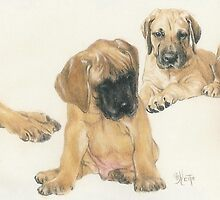 Great Dane Puppies by BarbBarcikKeith