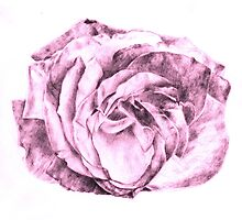 Pink Shaded Rose in Contrast by Leanne Osborne