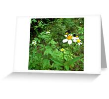 BLACK BEES WITH BUSTLES Greeting Card