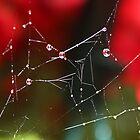 Natures Decoratation by AnnDixon