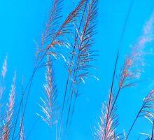 wildgrass by JavaPhotoArt