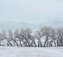The Rockies Winter (March) 2014 by Camila Bruce Photography