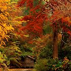 Autumn in the Dandenongs  by margotk