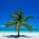 All By Myself - Lone Coconut Palm by Karen Willshaw