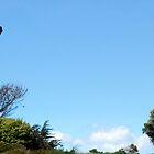 Berkeley   Marina Hawk by David Denny