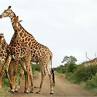 COMEPTITION - GIRAFFE – Giraffa Camelopardalis (KAMEELPERD) by Magaret Meintjes