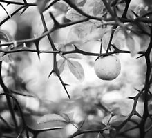 Thorns by Sarah Thompson-Akers